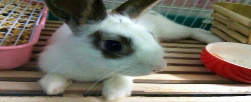 【ミニウサギ】ペットのウサギのご紹介