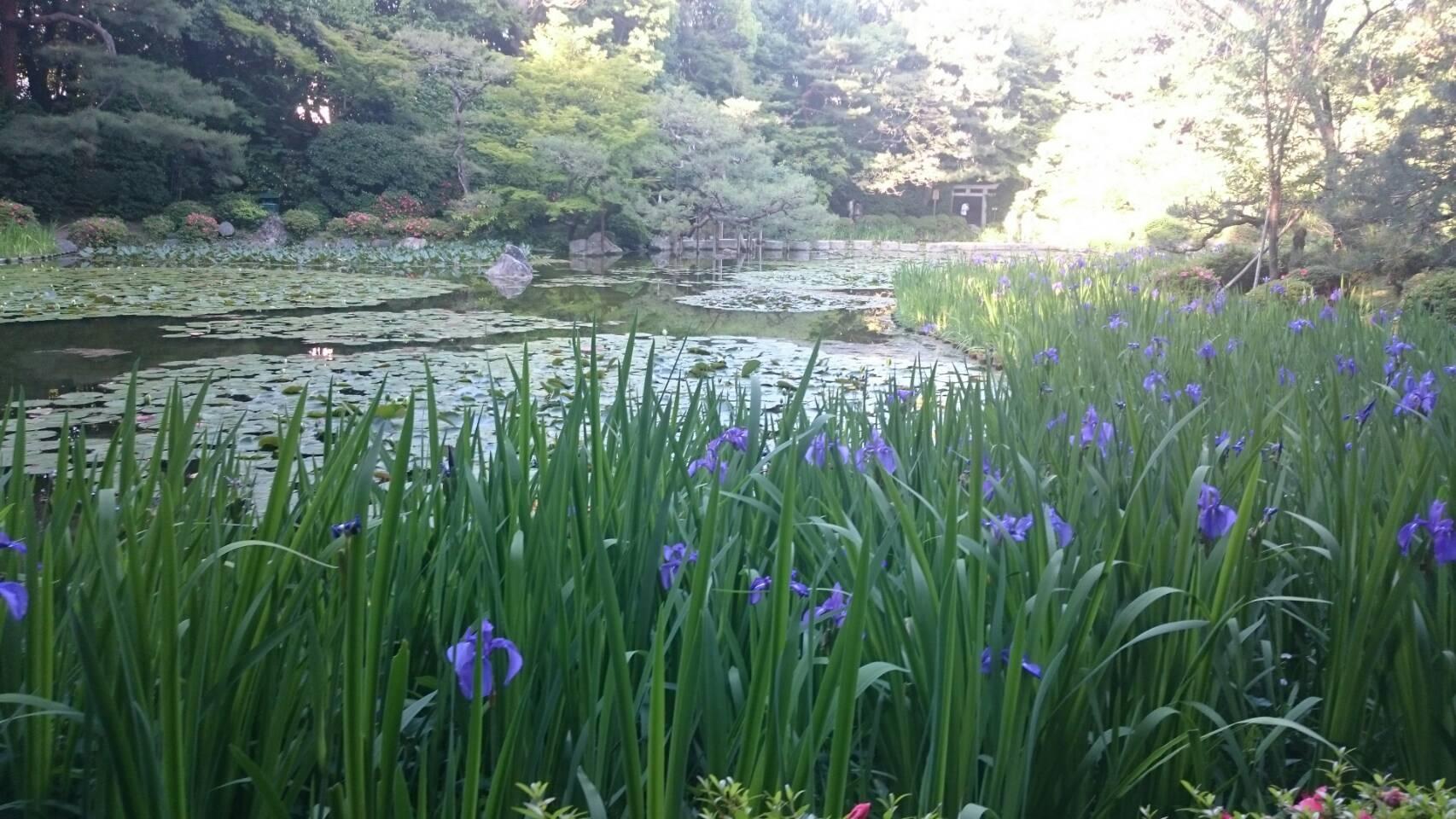平安神宮6.jpg