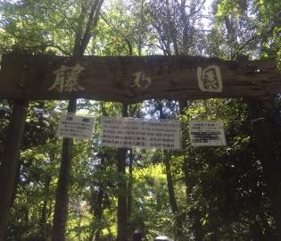 藤の園.jpg