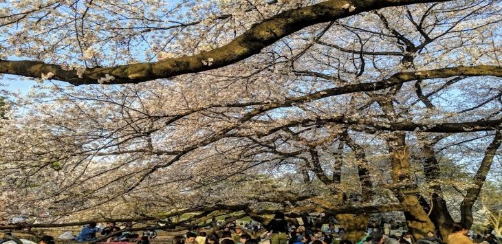 【東京都】砧公園